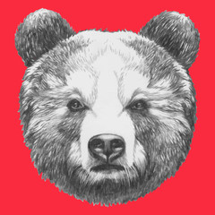 Hand drawn portrait of Bear. Vector isolated elements.