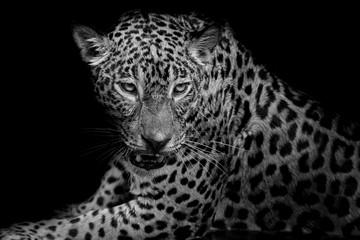 Wall Mural - black & white Leopard portrait isolate on black background