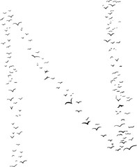Bird Formation In N