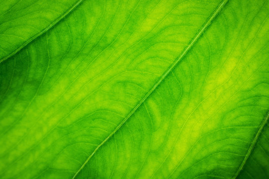 green leaf background,nature blur  background