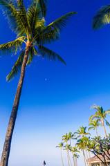 Moon peeking out behind a palm tree.