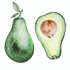 Avocado watercolor