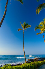 Palm trees on an exotic beach.