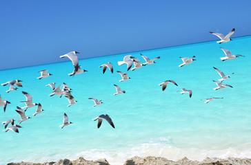 Seagulls on the coast of Little Exuma, Bahamas
