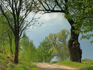 rural road in spring landscape