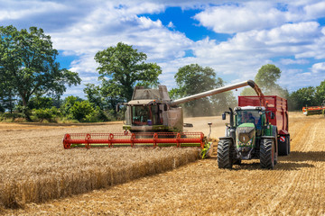 Mähdrescher und Traktor mit Ladewagen bei der Getreideernte - 2899