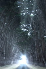 Road covered by a canopy of trees.