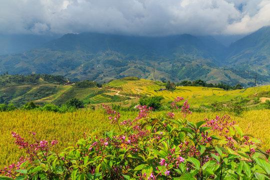 Flowers moutain vietnam