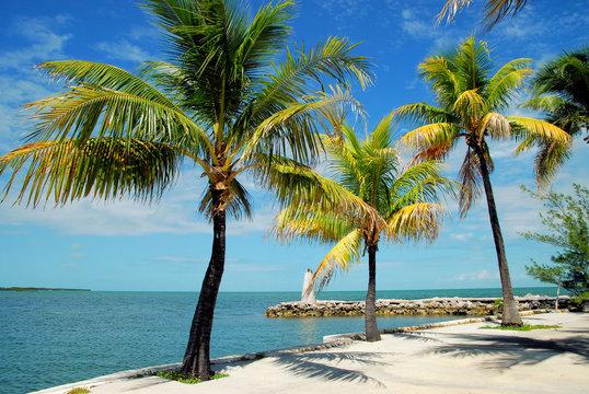 Florida Keys / Views from Marathon in the Florida Keys