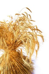Getreide / Garbe / weisser Hintergrund