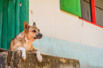 Dog waiting for someone at home.