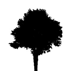 Tree Silhouette Isolated on White Background. Vector Illustratio