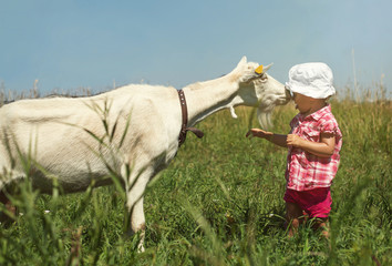 Little girl Outdoor play with a White Goat. Outdoor Holiday in Village farm