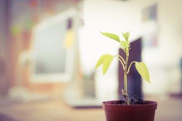 Plant in front of a creative working desk
