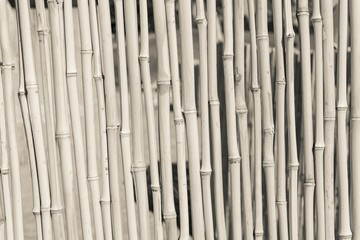 fence from a dry bamboo of beige color