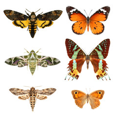 Butterflies / Different large Mediterranean butterfly species