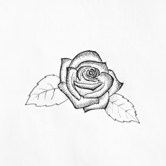 Pen sketch of rose