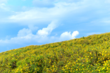 Out of focus Mexican Sunflower Weed fields with blue sky