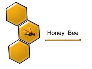 Miele d'api