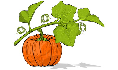 Pumpkin under its leaves