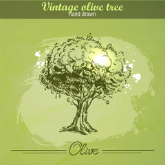 Vintage hand drawn olive tree on watercolor grunge background