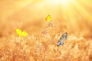 Beautiful butterflies on meadow
