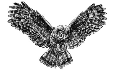 Owl flying draw monochrome vector illustration.