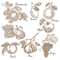 Hand drawn sketch fruit set. Vector illustration