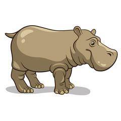 Hippopotamus 001