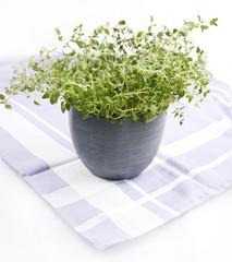zioła w kuchni - tymianek