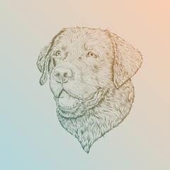 vector illustration head Labrador in sketch style