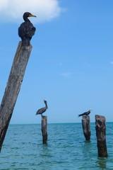 aves reposando en el golfo de mexico