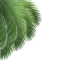 Green palm leaf frame isolated on white background