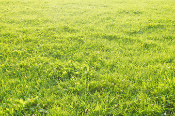 緑 背景素材