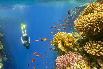 Woman snorkeling close to reef, Dahab, Red Sea, Egypt
