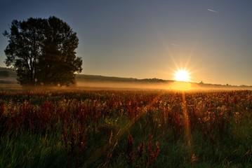 Foto op Aluminium Ochtendgloren Sonnenstrahlen am Morgen