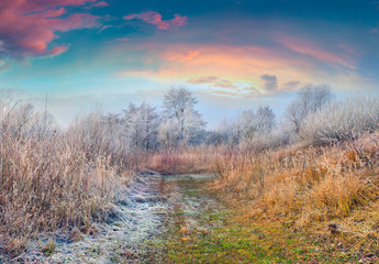 Coloroful frosty morning in the autumn forest
