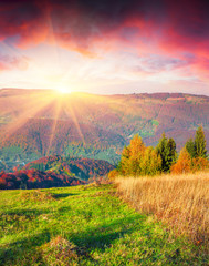 Wall Mural - Colorful autumn sunrise in the Carpathian mountains.