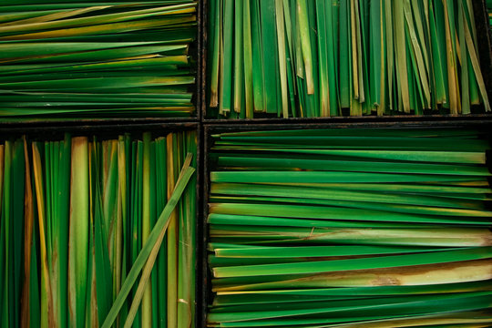 Lemon grass in boxes