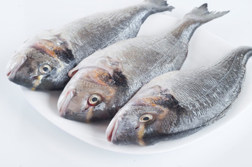 fresh and clean fish on white plate