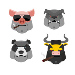 Set of angry animals. Head of a Pig and bull. Bad  Bear and Bull