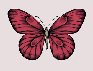 beautiful butterfly in vintage style. Hand-drawn contour lines and strokes.