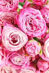 beautiful pink roses background, close up
