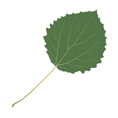 Wall Mural - aspen leaf