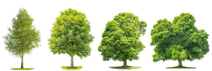 Collection of green trees maple, birch, chestnut. Nature objects