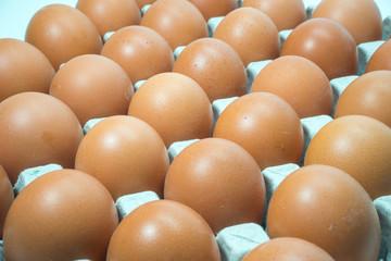 Egg, Chicken Egg 3