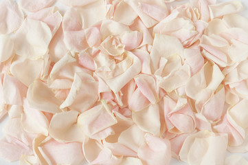 Cream rose petals background