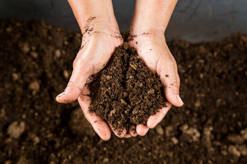 close up hand holding soil peat moss Wall mural