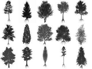 Set or collection of common trees, black silhouettes - 3D render