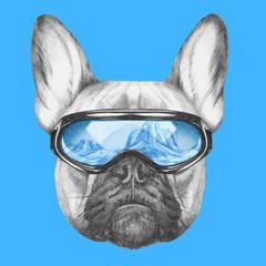 Portrait of French Bulldog with ski goggles. Hand drawn illustration.